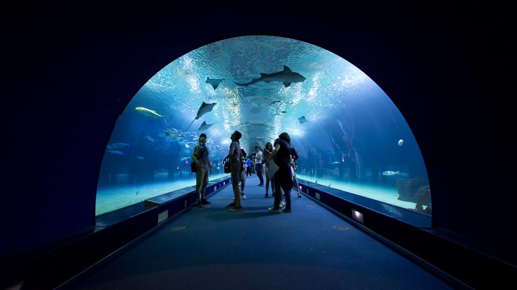 Túnel de los Océanos del Oceanogràfic
